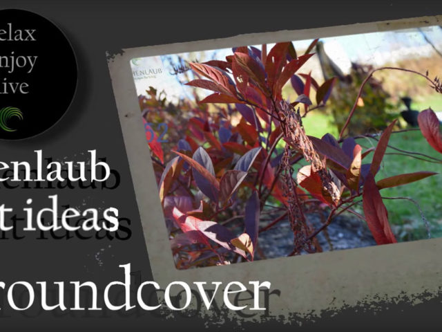 Plant Ideas – Groundcover