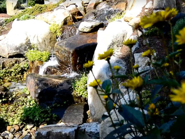 Why should you add plants to your water feature